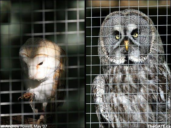 Bonny the barn owl and Navajo